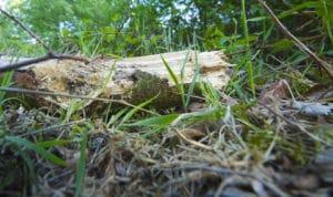 debris-removal-portland-oregon