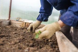 manual-weed-control-lawn-care-portland-oregon