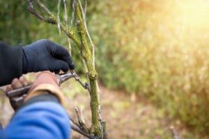 pruning-land-care-portland-oregon