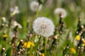 weeds-portland-oregon